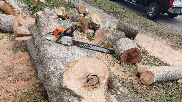 A professional approach to tree removal